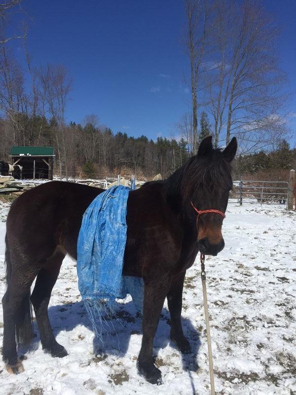 Chloe and the tarp