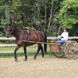 On Farm Lease Horses